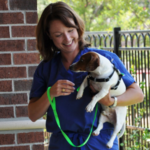 Canine Rehab Center | Dr Brode