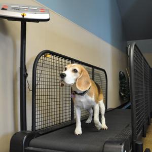 Canine Rehab Center | Land Treadmill
