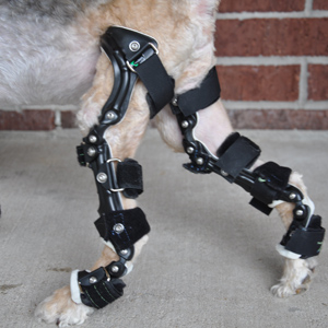 Canine Rehab Center | Mobility Aides