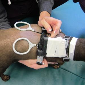 Canine Rehab Center | PEMF
