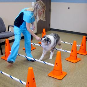 Canine Rehab Center | Therapeutic Exercies