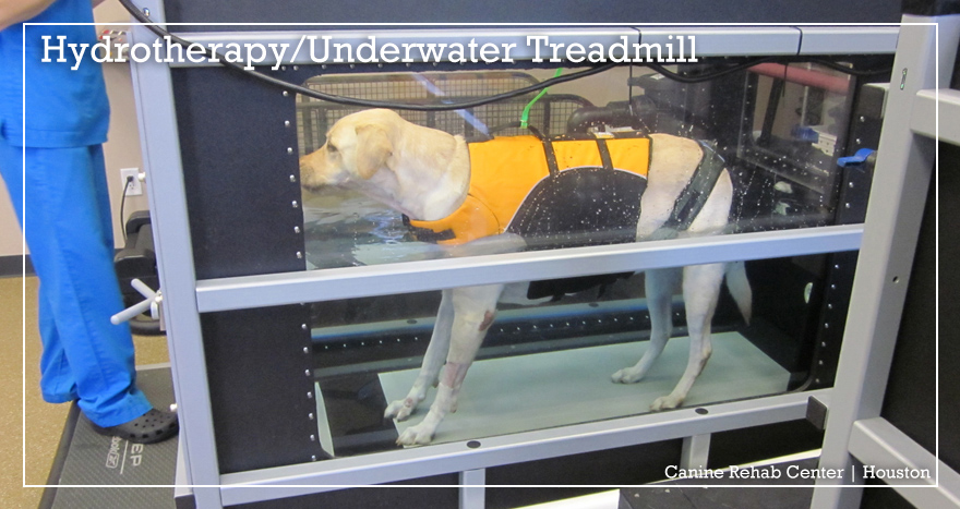 Canine Rehab Center Houston | Hydrotherapy