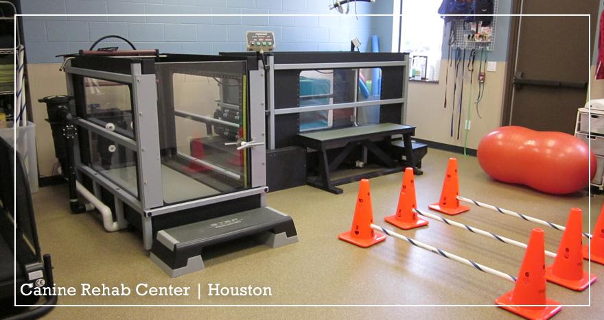 Canine Rehab Center Houston | Rehab Room