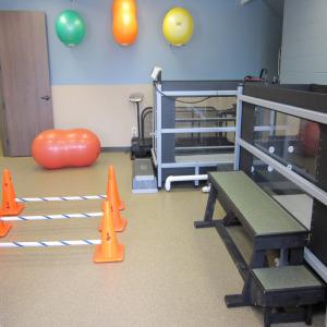 Canine Rehab Center Houston